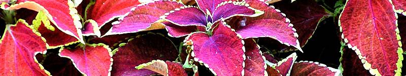 http://www.hollytreegroup.com/wp-content/uploads/2011/06/banner_gardening_01.jpg