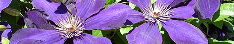 http://www.hollytreegroup.com/wp-content/uploads/2011/06/banner_gardening_03.jpg